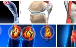 Продукты полезные для суставов и связок таблица
