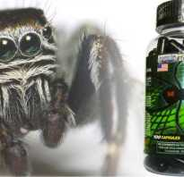 Таблетки черный паук