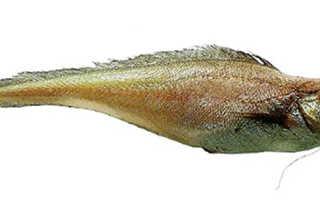 Рыба лимонелла калорийность