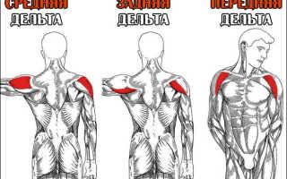 Упражнения на плечи с гантелями в домашних