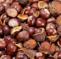 Каштановые орехи от каких болезней
