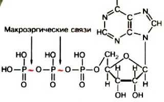 Каковы конечные продукты реакции атф h2o