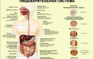 Ферменты пищеварительной системы человека таблица