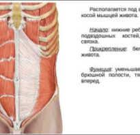 Упражнения для поперечных мышц живота