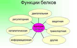 Белок растительный и животный таблица